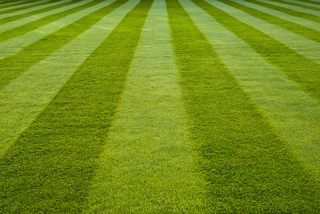 Lawn Sand – Too Much of a Good Thing? | Proctors | Proctors NPK