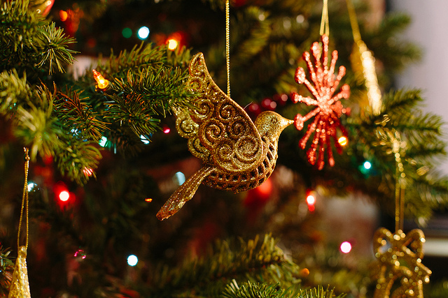 How to Keep Your Christmas Tree Alive Until Next Year | Proctors NPK
